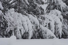 Feb 6, 2010 (-Jeffrey-) Tags: city winter usa snow cold weather del delaware february feb blizzard eastcoast delmarva doverdelaware stateofdelaware delawarecapital
