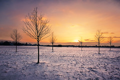 tree(s) & snow 3 (Dennis_F) Tags: schnee trees winter sunset shadow red sky orange sun snow tree rot yellow clouds germany deutschland colorful sonnenuntergang sundown angle sony natur wide himmel wolken sigma wideangle gelb dslr karlsruhe landschaft sonne 1020 farbe bume ultra baum farbig uwa ultrawideangle sigmalens a700 sigma1020 uww sonyalpha sonydslr sunshite neureut alpha700 sonya700 sonyalpha700 dslra700 sigma1020456 sigmaobjektiv needspringnow