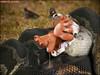 Eaten by Snakes (vorevillefan) Tags: foodchain alienabduction vore eatenalive beingeaten eatingpeople snakefood snakefeeding gettingeaten voreville beingeatenalive snakeseating damselsindistress alienfood womaneater hungrymonsters swallowedwhole alieneating eatenby peoplebeingeaten eatenbyants eatenbyalion swallowedalive eatenbymonsters snakevore monstervore blobvore bugvore peopleeaten peopleeatenalive eatenbyworms hungryaliens maneaten maneatenalive peopleeatenby peopleeatenbyanacondas peopleeatenbyanimals peopleeatenbyblobs peopleeatenbybugs peopleeatenbysharks peopleeatenbysnakes peoplegettingeatenbyanimals peoplegettingeatenbysharks peopleswallowedbyfish peopleswallowedbysnakes peopleswallowedbywhales slugvore snakeeatingman snakeeatsman snakeseatingpeople swallowedwholeandalive swallowedwholegiantess womaneatenalive alieneats alienseat animalseatingpeople eatenaliveby eatenalivebyasnake eatenalivebyaliens eatenalivebymaggots eatenalivebymonsters eatenalivebyparasites eatenalivebyplants eatenalivebyrats eatenalivebysnakes eatenalivebyworms eatenbyadragon eatenbyashark eatenbyatiger eatenbypiranhas girlseaten maneatingsnakes wormseating