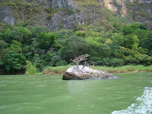 En el Cañón del Sumidero (27)