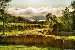 Hillside Pasture, #4 (steveyaphotos) Tags: cloud lake ny newyork field fog rural vineyard country hill foggy vineyards pasture upstatenewyork hay bales fingerlakes hayrolls keukalake stevenainsworth