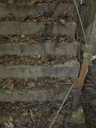 Leaf-littered stairs