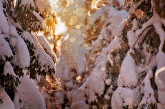 Sparkling Light (Latyrx) Tags: trees winter light shadow sun snow nature sunshine sparkles photoshop suomi finland photography photo nikon dof shine graphic natural bokeh stock perspective snowing finnish nikkor sell 70300mm untouched vr mikko 2010 resize latyrx d90 bokehlicious nikond90 mikkolagerstedt