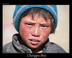 Changpa Boy, Rupshu Valley, Chanthang Plains, Ladakh,  Jammu &  Kashmir, India - 27.08.09 (Candle Tree) Tags: india jammukashmir korzok changpa mountaindesert transhimalaya colddesert korzokvillage nomadsofladakh highaltitudedesert childrenofladakh rupshuvalley chanthangplains changpaboy