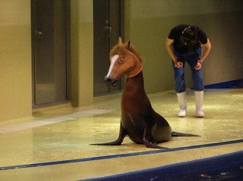horseal