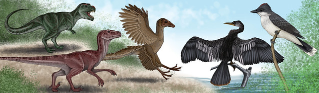 Dinosaur to Bird Evolution