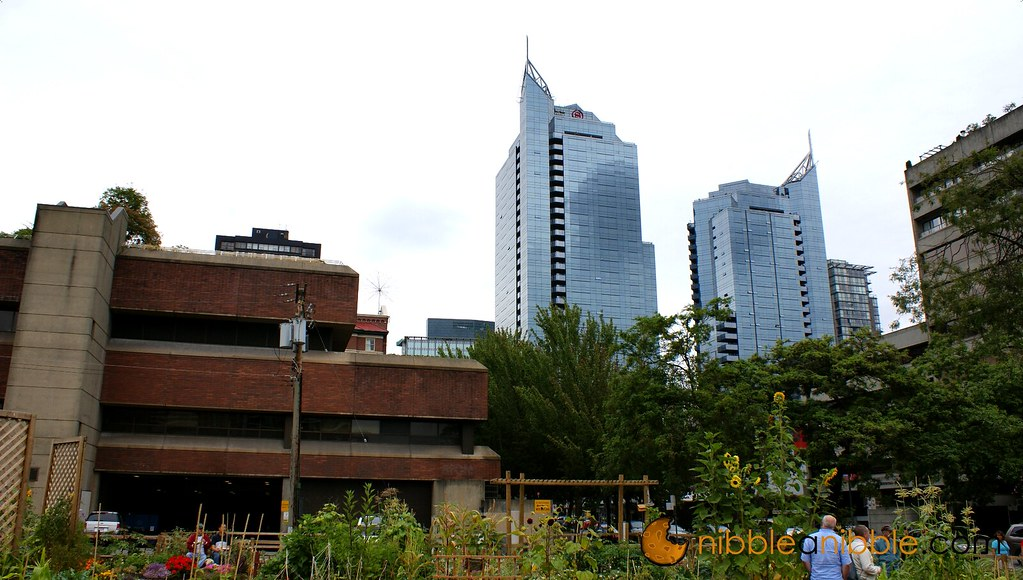 Downtown Vancouver Garden