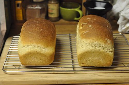 half whole wheat bread