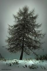 The Wintery Tree (markku mestila) Tags: anawesomeshot platinumheartaward miasbest magicunicornverybest