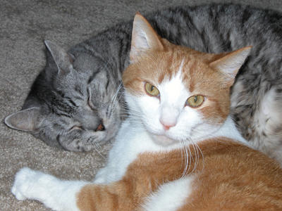 022810_cats_old