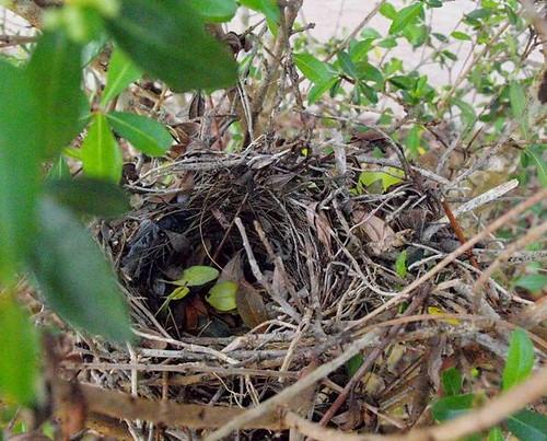 Hidden Nest