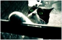 Let me in.. (DigitalObserver.) Tags: kitty whiskers greeneyes utata anxiety 2010 letmein giacomobrunelli digitalobserver