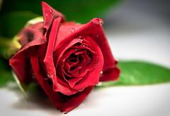 Larmes (Paolo Pizzimenti) Tags: fleurs paolo femme experiment olympus hommage inverse joie graphisme larme