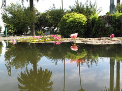 Fish Pond, Clive Square, Napier (Eyersh) Tags: water reflections napier waterlillies hawkesbay clivesquare canong10
