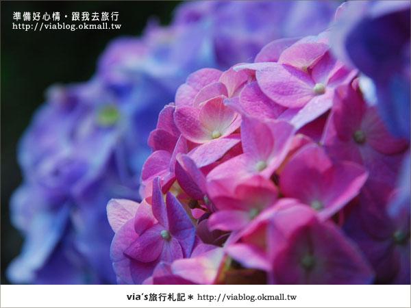 【梅峰農場】不止桃花美!梅峰農場賞花趣~(下)8