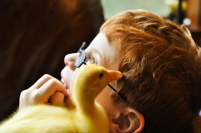 ducky4