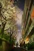 坂道の夜桜