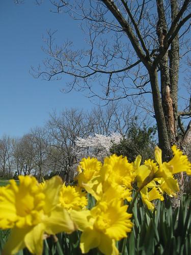 2010-04-02-IMG_6919