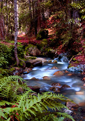 Unicorn Creek (*~Dawn~*) Tags: california water colors creek spring colorful saratoga bayarea ferns unicorns sanborn sanbornskylinecountypark dawniscool dawnisthebest thankyouaaronreedforthetags sanborncreek