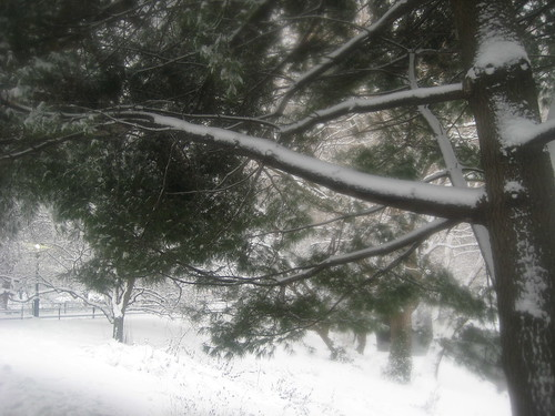 Picture 14: Foggy Lens, Snowy Trees