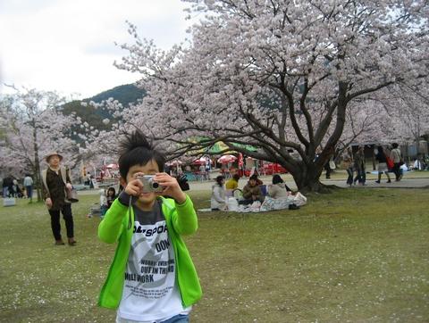 錦帯橋 花見11