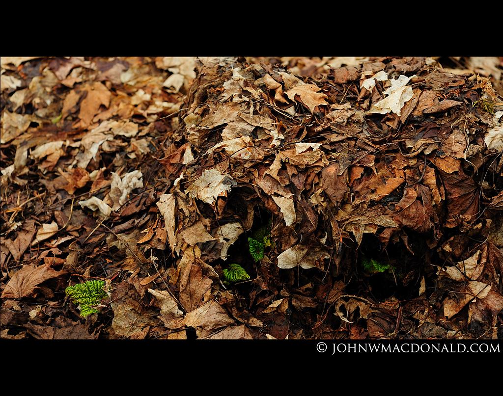 Mulch & Rhubarb