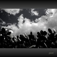 Yo soy del sur … (gicol) Tags: cactus sky bw italy cloud white black byn blanco italia nuvola br south negro bn ciel cielo sur opuntia tuna bianco nero salento puglia nube sud fichidindia apulia terrone meridione theauthorsclub