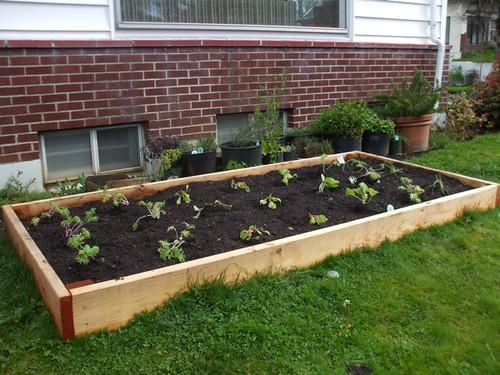 2010 garden - week 1
