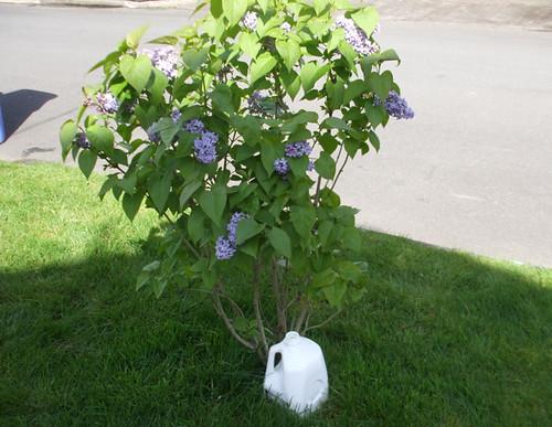 Recycled Gardening Tricks