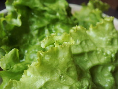 CSA Winter 9: Lettuce