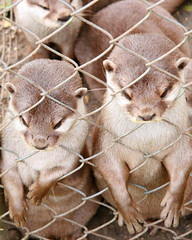 You otter let us out! (mind the goat) Tags: park new forest wildlife otter newforest