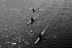 Riflessioni di Canottieri (Leman.Parker) Tags: people bw white 3 man black water river person florence reflex fiume bn canoe persone firenze arno tre acqua bianco nero canoa riflesso uomini canottieri