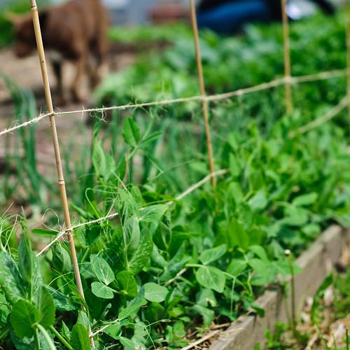 spring harvest april 24 '10