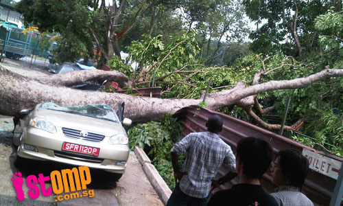 Cars totally wrecked by fallen tree at Sungei Kadut