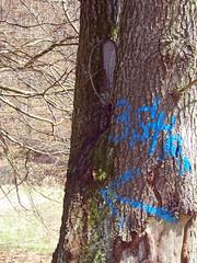 Da (marion streich) Tags: blue springtime baumstamm blauerpfeil frlingssonntaginhelsen