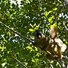 Lemur (rackyross) Tags: ranomafana madagascar madagasikara lemur lemure animali animales animals nature natura naturaleza wildlife マダガスカル アフリカ 马达加斯加 非洲 مڈغاسکر ประเทศมาดากัสการ์ మడగాస్కర్ мадагаскар மடகாசுகர் मडगास्कर مادغاسکر 마다가스카르 ಮಡಗಾಸ್ಕರ್ мадағасқар მადაგასკარი մադագասկար मेडागास्कर מדגסקר ماداگاسکار މަޑަގަސްކަރަ مدغشقر مادجاسكار মাদাগাস্কার أفريقيا افريقيا আফ্ৰিকা আফ্রিকা африка αφρική آفریقا આફ્રિકા अफ़्रीका אפריקה աֆրիկա აფრიკა ಆಫ್ರಿಕಾ 아프리카 ອາຟຣິກກາ आफ्रिका ആഫ്രിക്ക افریقہ ஆப்பிரிக்கா африк