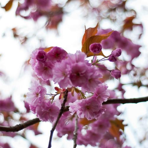 010510_ Blossom #2 (121/365)