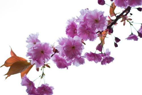 010510_ Blossom #1