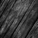 Wood Texture (B&W)