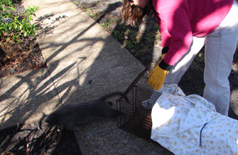 Releasing a cat who was neutered and vaccinated in Mayport, Florida