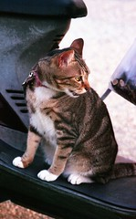 2010-04041 (miauwhite) Tags: jupiter9 f285mm
