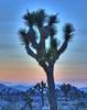 Joshua Tree at Sunset - Joshua Tree NP (GMills31) Tags: california sunset cactus mountains tree clouds desert dusk joshuatree nationalparks hdr joshuatreenationalpark photomatixpro topazlabs mountainhighworkshops