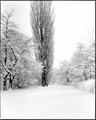 Lund in snow (JPlater) Tags: bw snow lund mamiya film d76 epson ilford rz67 v500 panf50 nilstorp