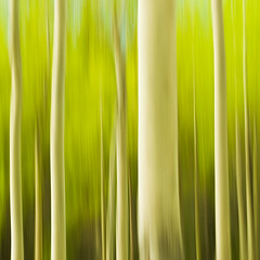 Trees Like To Party (Luke Austin) Tags: canada blur landscape spring alberta paintingwithlight aspen intimatelandscape lukeaustin
