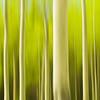 Trees Like To Party (Luke Austin) Tags: canada blur landscape spring alberta paintingwithlight aspen intimatelandscape lukeaustin