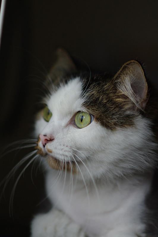 調焦心得跟非可愛寫實貓肖像五張