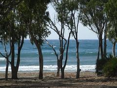 Cabo de Gata - la playa de los Genoveses 1 (luco*) Tags: beach de los spain cabo playa andalucia espana gata eucalyptus espagne plage andalousie andaluz genoveses