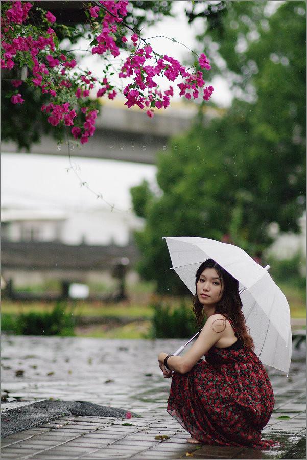 家貝。下雨天