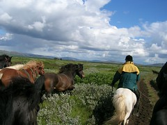 Horse riding in South Iceland (South Iceland) Tags: travel nature geysir eruption eyjafjallajkull southiceland eyjafjallajokullglacier
