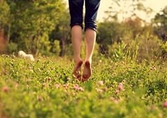 Eternal fields of clover.(Day 293) (Allison Imagining) Tags: mahpuppyisnamedfigi anditreallydoesntmatterhowyoupronounceitbecausesheshearditalmosteverypossiblewayxd